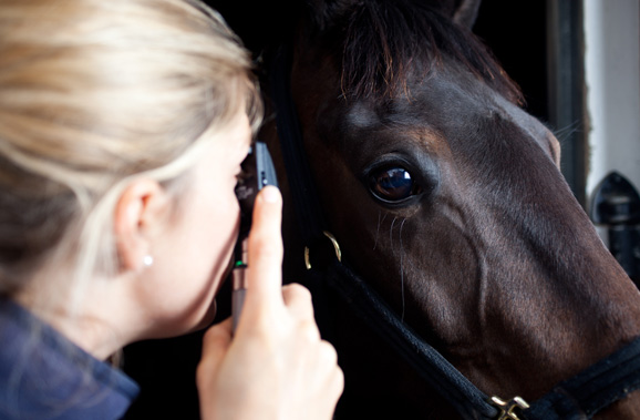 equine care coach house vets